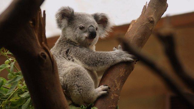 Reisebericht Australien