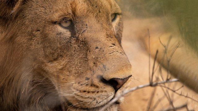 Träumen von einer Fernreise nach Südafrika